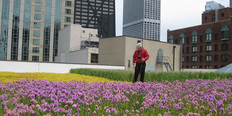 Skilled Green Roof Solutions leak test technicians use low-voltage electric pulses to identify and isolate any breaches in waterproof membranes.