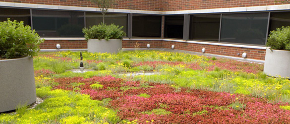 Green Roof Solutions services