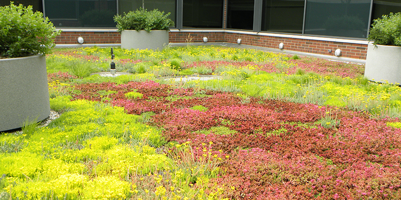 Green Roof Solutions drainage options for stormwater management and water retention.