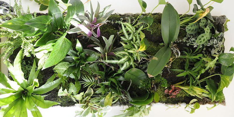 Green Roof Solutionsn non-organic mats to store water and allow for root growth in fleece-based living wall systems.