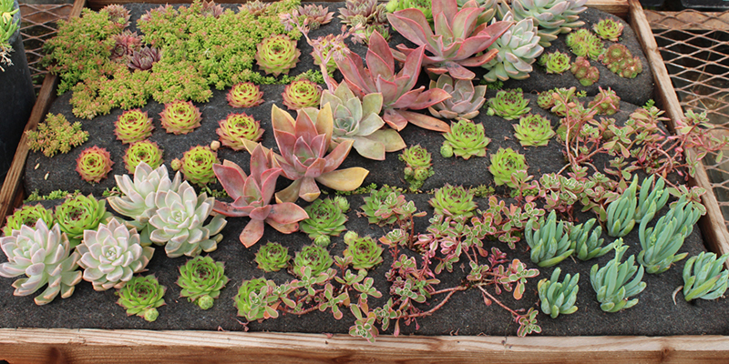 Some of the best Green Roof Solutions living wall projects from around the country.