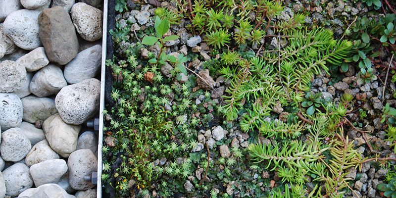 Green Roof Solutions customstormwater management products and solutions