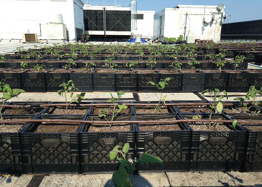 All Products Made In The United States Unless Otherwise Noted. ©2016 Green  Roof Solutions ...